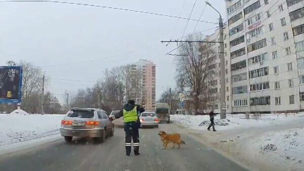 Bir polisin yardımıyla karşıya geçen köpeğin hikayesine kalp ısıtan devam: Aşk peşindeymiş - Sputnik Türkiye