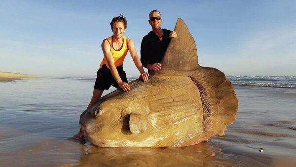 Avustralyalı balıkçılar dev bir balık buldu - Sputnik Türkiye