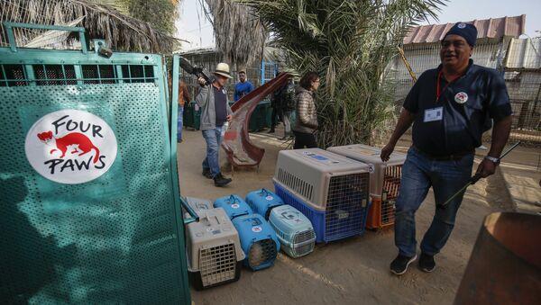 Gazze'deki hayvanat bahçesinde kötü koşullarda yaşayan hayvanlar Ürdün'e taşındı. - Sputnik Türkiye