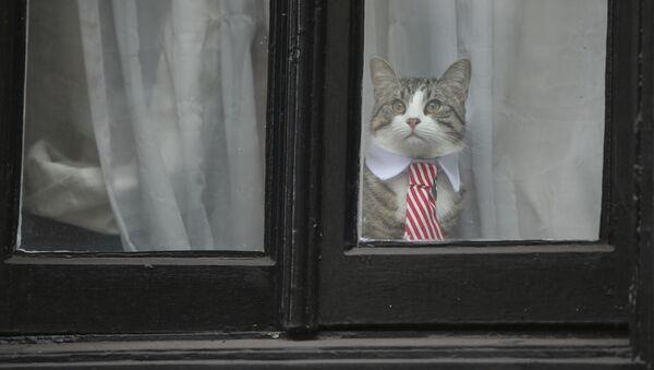 Assange'ın avukatı: Kedi James kurtarıldı ve iyi - Sputnik Türkiye