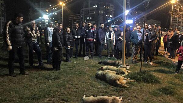 Ankara Batıkent'te sokak köpekleri zehirlendi. - Sputnik Türkiye