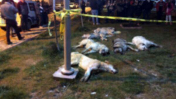 Ankara - Batıkent - Zehirlenen köpekler - Sputnik Türkiye