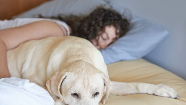 'Kadınlar için bir köpekle uyumak bir erkekle uyumaktan daha iyi' - Sputnik Türkiye