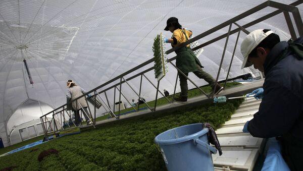 Japonya tarım - Sputnik Türkiye
