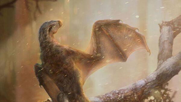 Yarasa kanatlı yeni bir dinozor türü keşfedildi - Sputnik Türkiye
