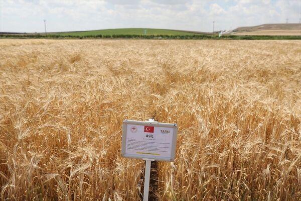Yerli ve milli tohumlar tanıtıldı - Sputnik Türkiye