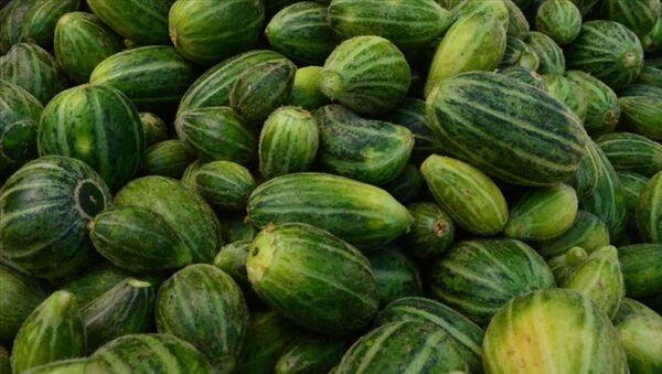 Şanlıurfa'nın Viranşehir ilçesinde yetiştirilen dışı karpuza, içi kavuna, tadı ise salatalığa benzeyen 'şelengo - Sputnik Türkiye