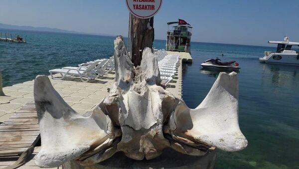 Edirne'nin Saros Körfezi'ne kıyısı bulunan Keşan ilçesine bağlı Yayla köyü sahilinde kıyıya vurmuş balinaya ait olduğu değerlendirilen kemikler bulundu. - Sputnik Türkiye