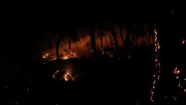 Muğla'daki orman yangınında 34 ev tahliye edildi - Sputnik Türkiye