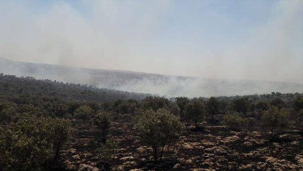 Mardin'in Midyat ve Nusaybin ilçeleri arasındaki ormanlık alanda çıkan yangın kontrol altına alındı - Sputnik Türkiye