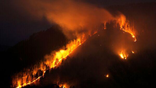 Rusya'nın Sibirya bölgesinde orman yangınları - Sputnik Türkiye