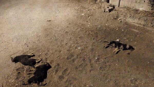 Yavru köpekleri aracıyla ezip kaçtı - Sputnik Türkiye