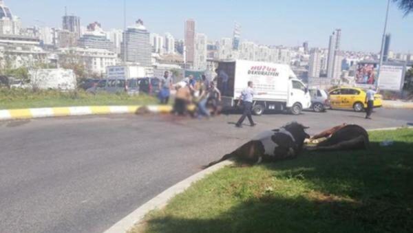 Kapalı kasada havasız kalan kurbanlık, cadde ortasında kesildi - Sputnik Türkiye