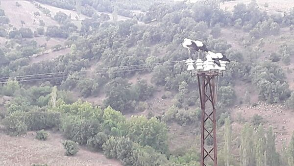 Leylekler ölmesin diye elektrikleri kestiler  - Sputnik Türkiye