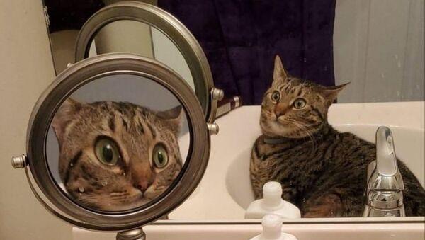 Büyüteçli ayna karşısındaki görüntüsünü tanıyamayan kedi, sosyal medyada viral oldu - Sputnik Türkiye