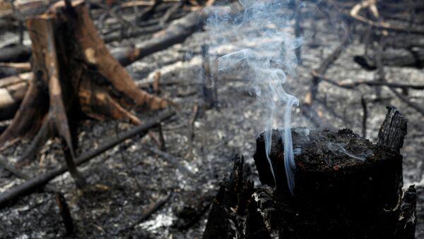 Amazon Ormanı yangın - Sputnik Türkiye