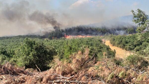 Keşan'da orman yangını - Sputnik Türkiye