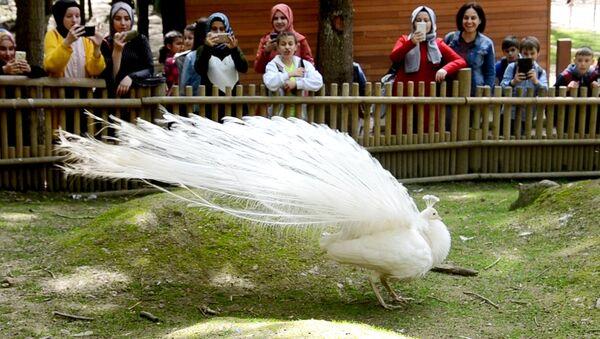 Kurban Bayramı'nda tabiat ve milli parkların ziyaretçisi 4 milyonu aştı - Sputnik Türkiye