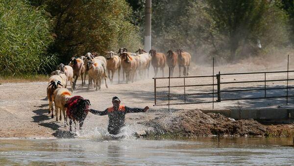 846. Sudan Koyun Geçirme Yarışması - Sputnik Türkiye