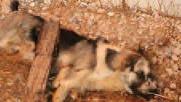 Sokak köpeği, bıçaklama - Sputnik Türkiye