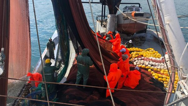 Trabzon - balıkçı - Sputnik Türkiye
