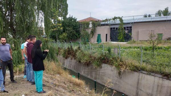 Ankara'da 3 köpek zehirlenip su kanalına atıldı - Sputnik Türkiye