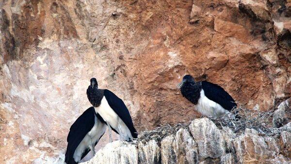 Kara leylekler, 25 yıl sonra Salda Gölü'nde  - Sputnik Türkiye