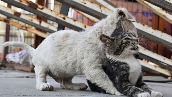 Kedi ve köpek - Sputnik Türkiye