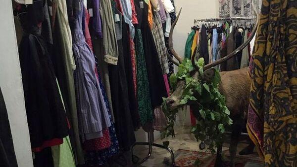 Mağazaya giren geyik kıyafetlerin arasında sıkışıp kaldı - Sputnik Türkiye