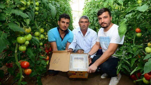 Canan Karatay'a tepki gösteren domates üreticileri - Sputnik Türkiye