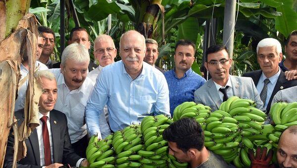 Türkiye Ziraat Odaları Birliği (TZOB) Başkanı Şemsi Bayraktar (sağda), muz, narenciye ve domates hasadı için geldiği Antalya'nın Alanya ilçesinde Alanya Ziraat Odası'nı ziyaret etti. - Sputnik Türkiye
