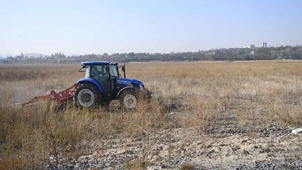 Ankara AOÇ arazisinde çiftçiler için tohum üretilecek - Sputnik Türkiye