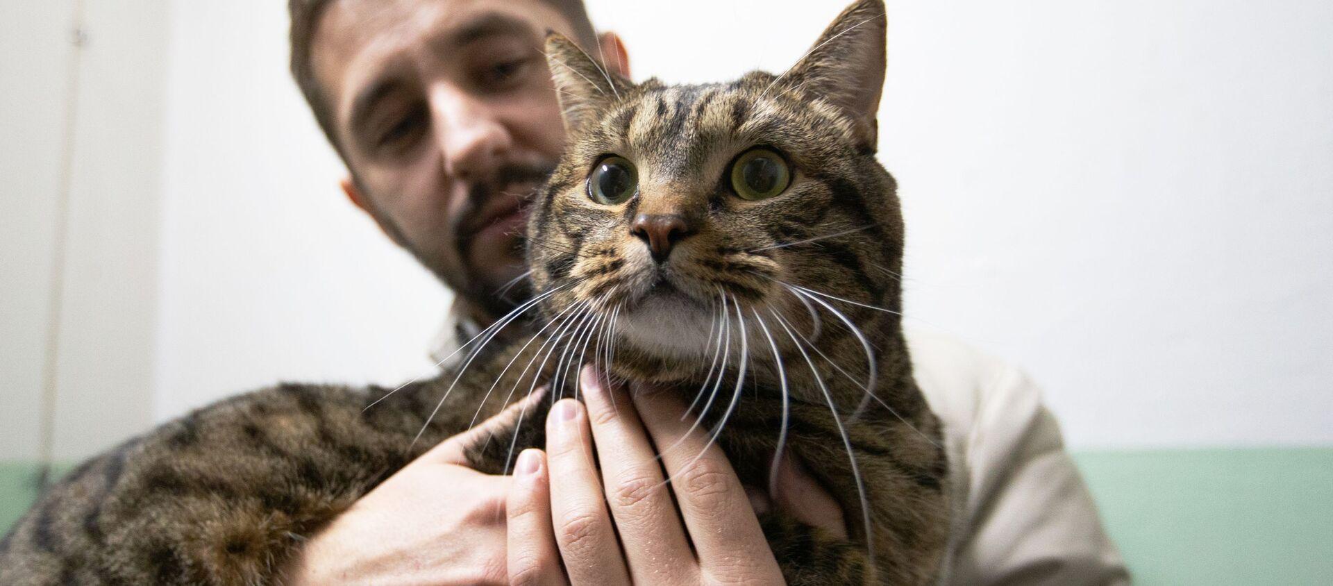Rusya'da sosyal medya yıldızları olan kediler - Sputnik Türkiye, 1920, 11.06.2020