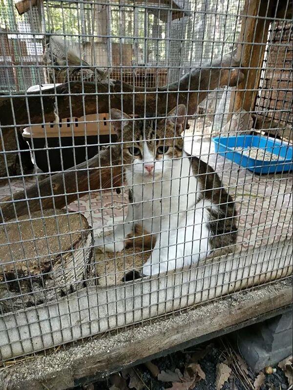 Rusya'da sosyal medya yıldızları olan kediler - Sputnik Türkiye