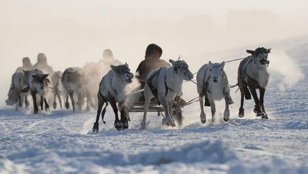Rusya'nın Uzak Kuzey bölgesindeki yerli halkları nasıl yaşıyor? - Sputnik Türkiye