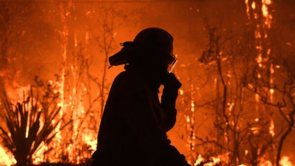 Avustralya orman yangınları - Sputnik Türkiye