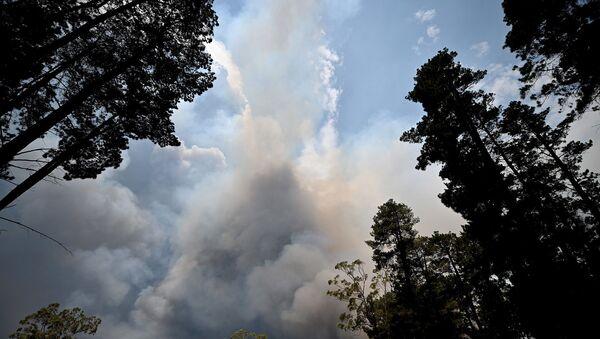 Avustralya - Orman yangınları - Sputnik Türkiye