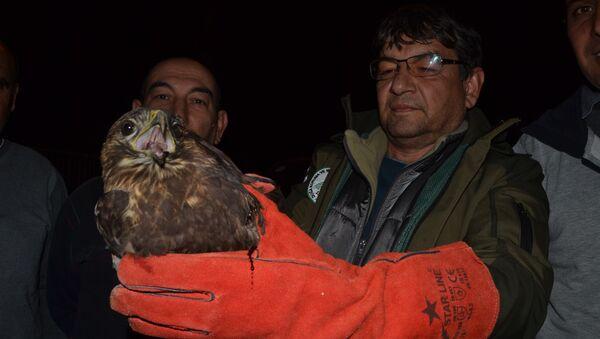 Yaralı halde bulduğu şahini tedavi ettirip yetkililere teslim etti - Sputnik Türkiye