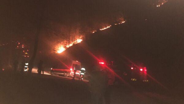 Trabzon ve Giresun'da orman yangınları - Sputnik Türkiye