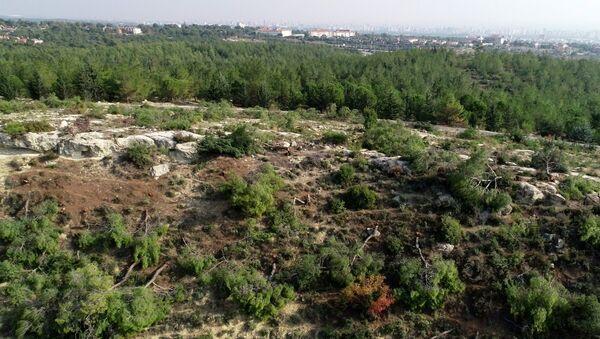Mersin'de 72 dönümlük orman alanındaki kızılçam ağaçları kesildi - Sputnik Türkiye