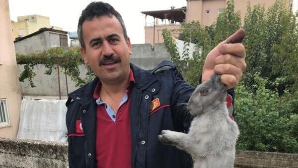 Adıyaman'da bir evin bacasına düşen tavşanı itfaiye ekipleri kurtardı - Sputnik Türkiye