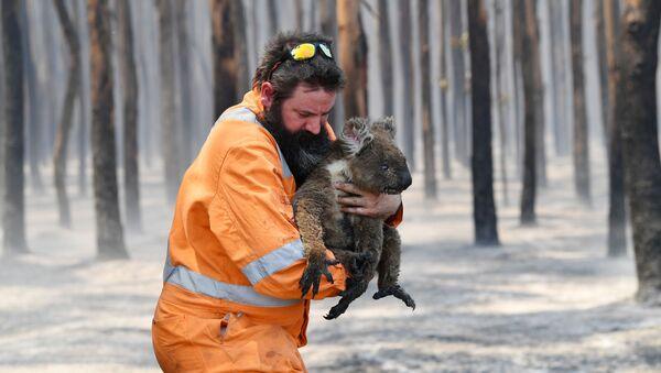 Австралийский пожарный со спасенной коалой - Sputnik Türkiye