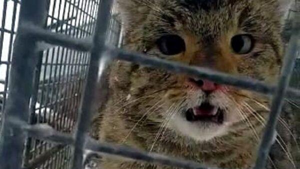 Hırsız kedi - Sputnik Türkiye