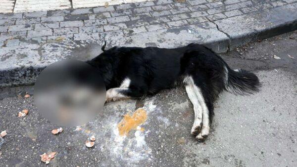 Ankara'da 20 sokak hayvanını zehirleyen kasap serbest bırakıldı - Sputnik Türkiye