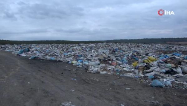 Banaz'da çöplükte 21 köpek ölü bulundu - Sputnik Türkiye