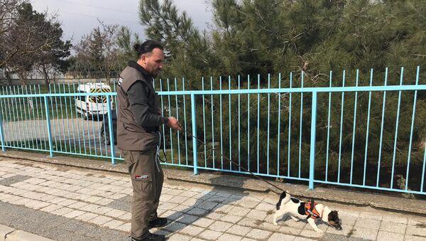 İstanbul Avrupa Yakası'nda elektrik dağıtımını üstlenen Boğaziçi Elektrik Dağıtım A.Ş (BEDAŞ) vatandaşlara kesintisiz enerji hizmeti sunmak ve elektrik arızlarına hızlı müdahale edilmesini sağlamak amacıyla arızayı noktasal olarak tespit etmek için özel eğitimli dedektör köpekleri kullanmaya başladı. - Sputnik Türkiye