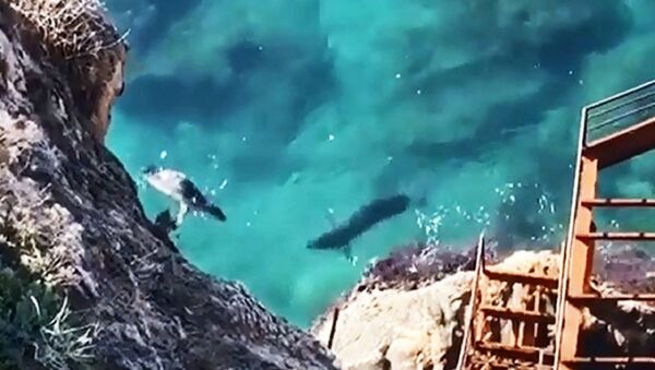 Akdeniz foklarının Antalya falezlerindeki mağaraları  - Sputnik Türkiye