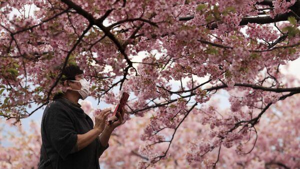 Japonya-koronavirüs-kiraz çiçekleri - Sputnik Türkiye