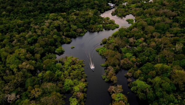 Amazon ormanları - Sputnik Türkiye
