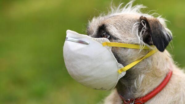 Koronavirüs salgını sırasında evcil hayvanlar  - Sputnik Türkiye